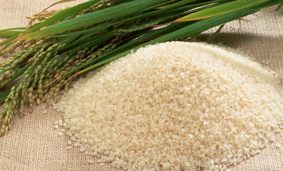 Круглозерный рис